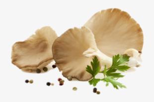mushroom training programme
