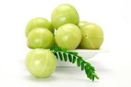 Gooseberry training programme